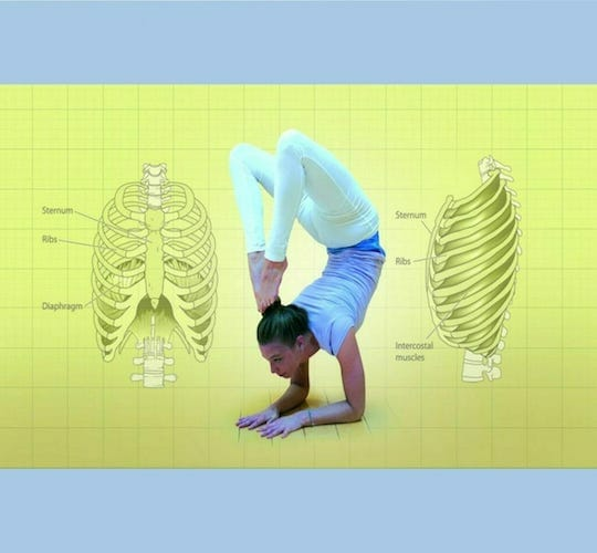 """<div style=""""line-height: 1.3; color: #ce402d; font-family: catamaran; """">London study retreat</br>How Yoga Works: </br>Posture, Flexibility and Anatomy</div>"""